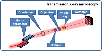 Schematic of transmission X-ray microscopy